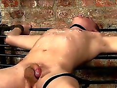 bdsm alegre blowjob homossexual gay alegres pitos alegre
