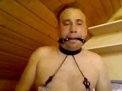 Slut in lingerie with nipple clamps, penis gag face harness